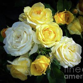 Jasna Dragun - Glory Of Roses