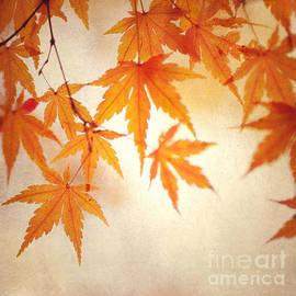 Julia Stefanie Stoehr - Glowing Autumn Leaves