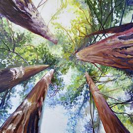 Cedar Lee - Glowing Forest