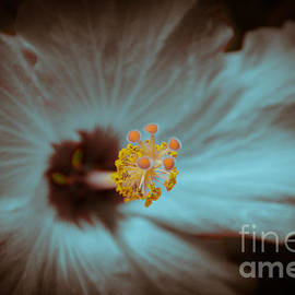Debra Martz - Glowing Hibiscus