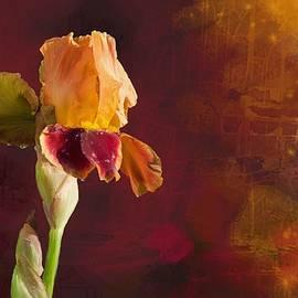 Debra Baldwin - Gold and Red Iris