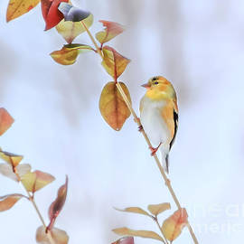 Peggy  Franz - Gold Finch Beauty