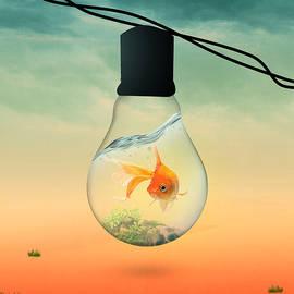 gold fish 4 - Mark Ashkenazi