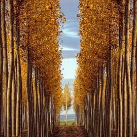 Wes and Dotty Weber - Golden Autumn D7270