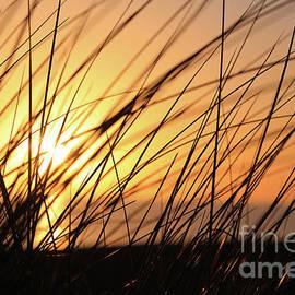 Chris Christoforou - Golden Beach Grass