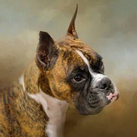 Jai Johnson - Golden Brindle Boxer