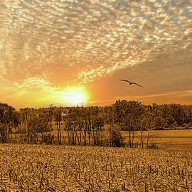 William Sturgell - Golden Country Sunset in Ohio