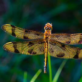 Linda  Howes - Golden Dragonfly