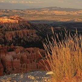 Mo Barton - Golden Evening Light Bryce Canyon 1