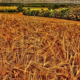 Karo Evans - Golden field in normandy