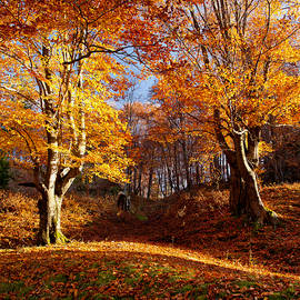 Ciprian Dumitrescu - Golden forest