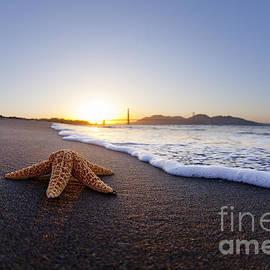 Sean Davey - Golden Gate Starfish