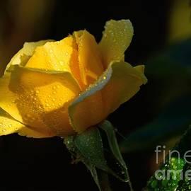 Elmar Langle - Golden Glow