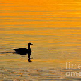 Elmar Langle - Golden Goose