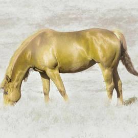 Hal Halli - Golden in the Pasture