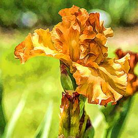 Geraldine Scull - Golden Iris
