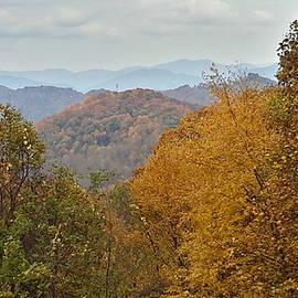 Joe D Dry - Golden Leaves