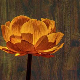 Leif Sohlman - Golden orange #g0