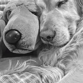 Jennie Marie Schell - Golden Retriever Dog and Friend