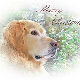 Jennie Marie Schell - Golden Retriever Dog Merry Christmas Card