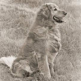 Jennie Marie Schell - Golden Retriever Dog Sepia