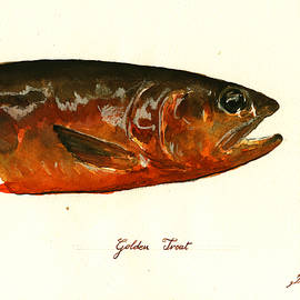 Golden trout  - Juan  Bosco