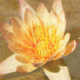 Rosalie Scanlon - Golden Water Lily