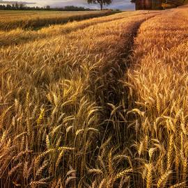 Debra and Dave Vanderlaan - Golden Waves of Grain
