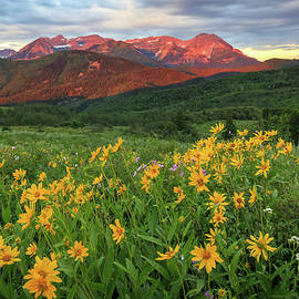 Johnny Adolphson - Golden wildflowers in the Wasatch Back.