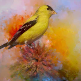 Marci Potts - Goldfinch atop the Torch Lily