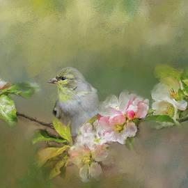 Jai Johnson - Goldfinch In The Garden 2
