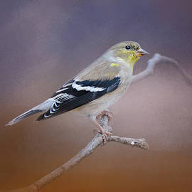 Jai Johnson - Goldfinch In The Light
