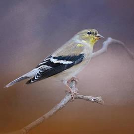Jai Johnson - Goldfinch In The Light
