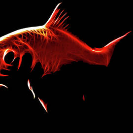 Tilly Williams - Goldfish 1