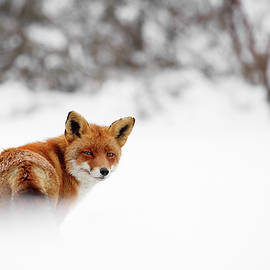 Roeselien Raimond - Gonna Walk and Don