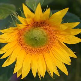 Carrie Goeringer - Good Day Sunshine