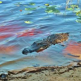 Good Morning Alligator