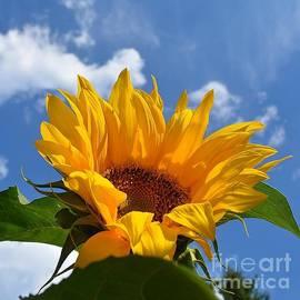 Lisa  Telquist - Good Morning Sunshine 2