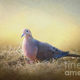 Sharon McConnell - Good Mourning Dove