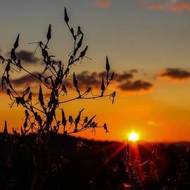 Lisa Lemmons-Powers - Goodnight Sun