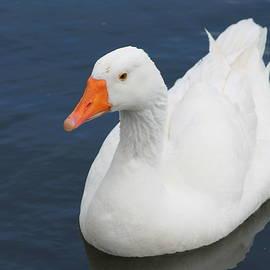 Jill Black - Goose on lake