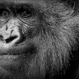 Jake Danishevsky - Gorilla Deep in Thoat