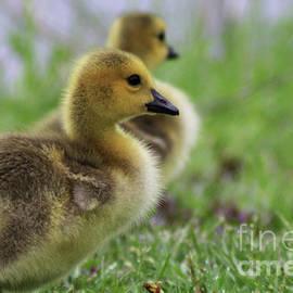 Laura Birr Brown - Gosling Profile