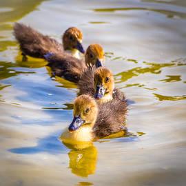 Robin Zygelman - Got My Ducks In A Row