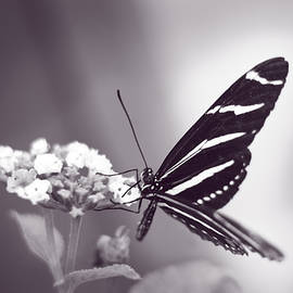 F Leblanc - Graceful Beauty - Monochrome