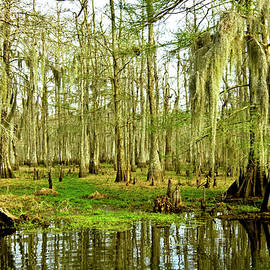 Scott Pellegrin - Grand Bayou Swamp