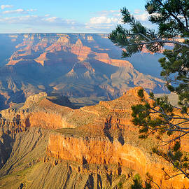 Victoria Oldham - Grand Canyon South Rim - Pine at Right