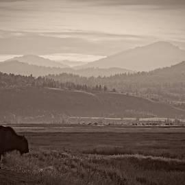 Christine Hauber - Grand Teton Bison
