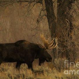 Priscilla Burgers - Grand Teton National Park Bull Moose