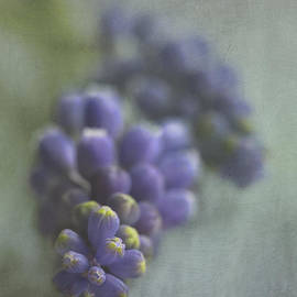 Elena Nosyreva - Grape Hyacinth